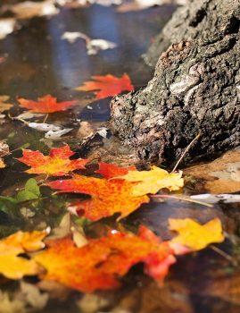 Autumn Magic Scent