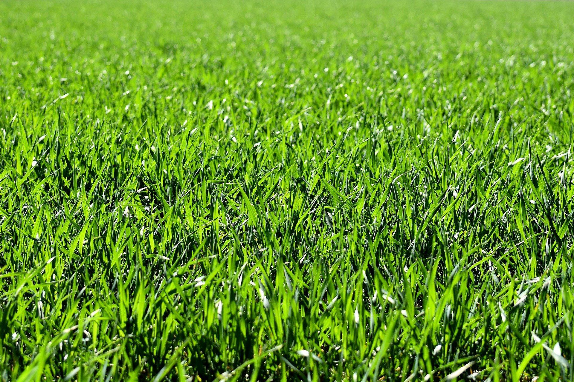 Fresh Cut Grass Scent